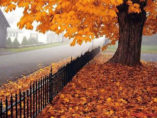 خلفيات صورالخريف