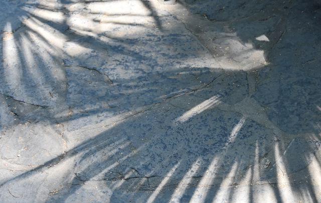 Como, Comojärvi, lake Como, Villa Carlotta, Tremezzo, Lario, Margherita Leoni, Clerici, Sommariva, Italy, Italia, Lombardia, pohjois-Italia, Italian järvialue, The Italian Lakes, North Italy Lakes, Rose