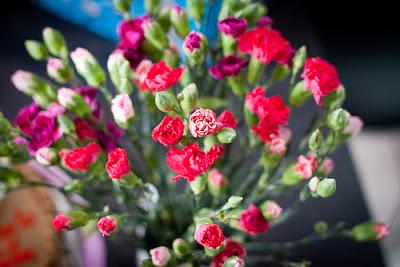 Canartion - Hoa cẩm chướng 4