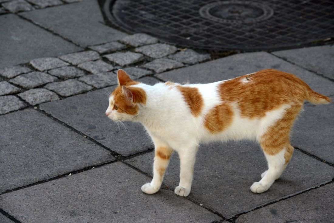 Australian Government Plans To Kill Two Million Feral Cats By Dropping Poisoned Sausages From Planes
