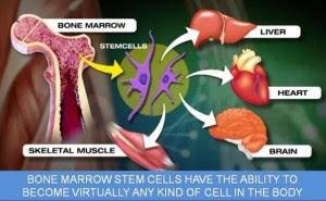 terapi stemcell, cara stem cell bekerja
