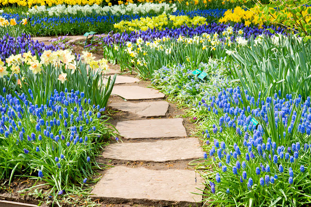 pathway through spring flowers