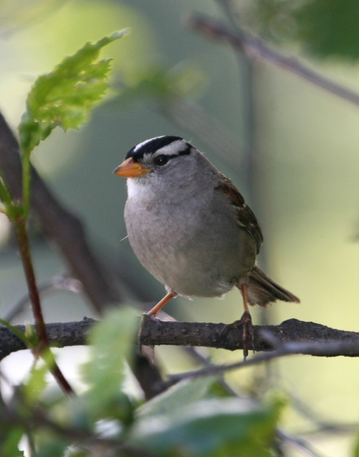 Wild Birds Unlimited: There are a lot of different ...