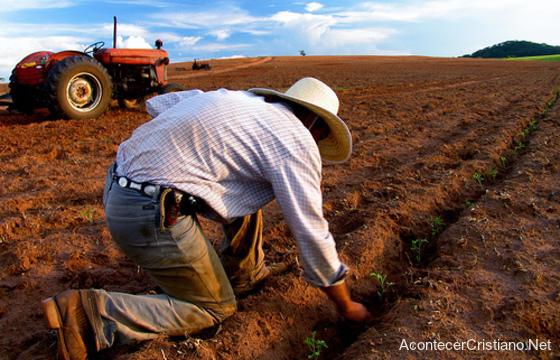 Agricultor trabajando en el campo