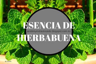Aceite esencial de hierbabuena de los más populares en masajes y terapias de la piel
