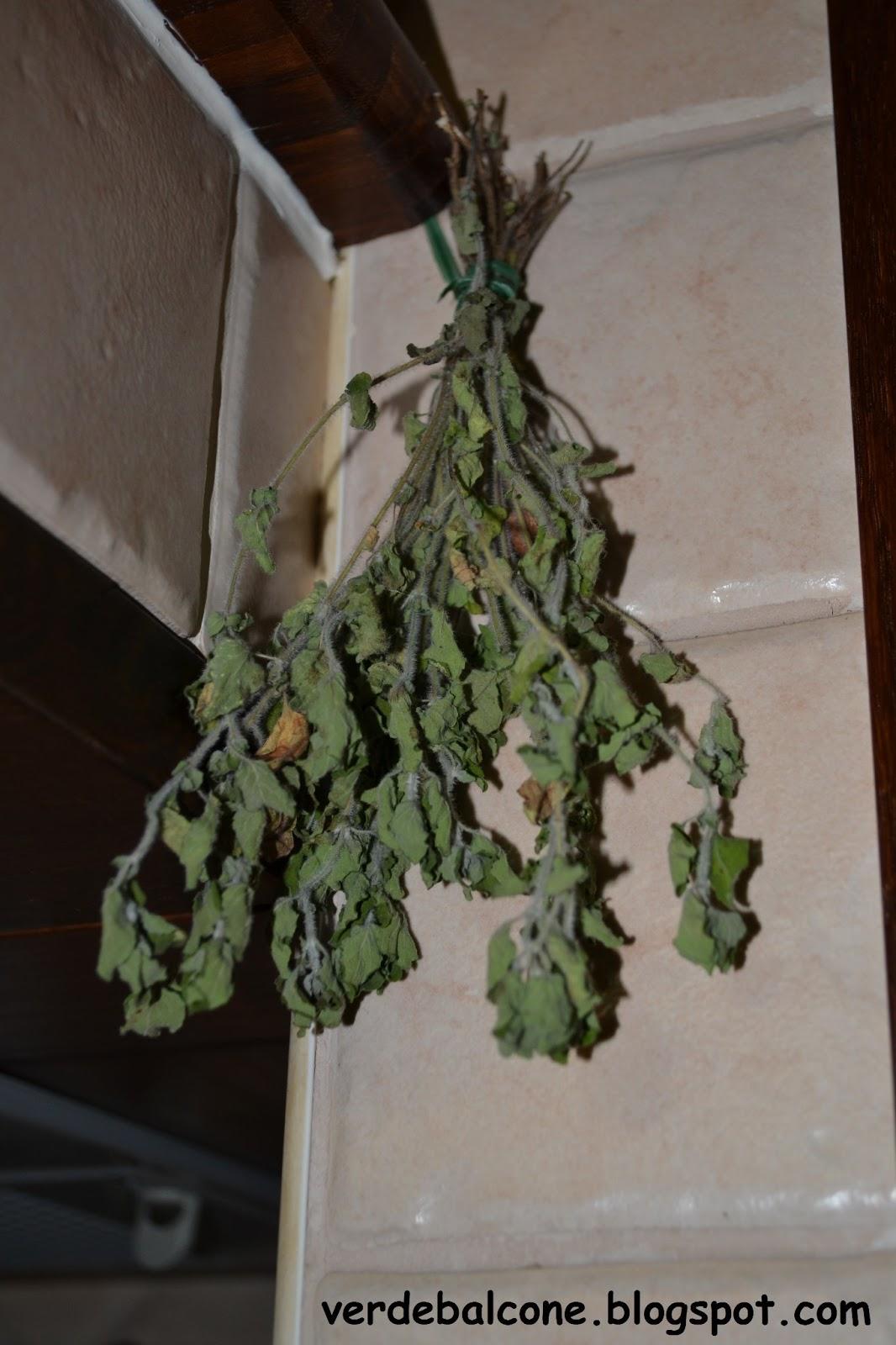 Quando Tagliare L Origano verde balcone.: l'arte di raccogliere ed essiccare le erbe