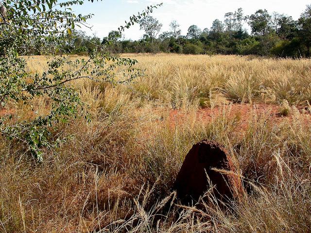 termitière Ankarafantsika