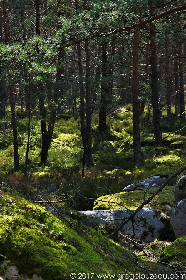 Franchard carrières... Fontainebleau, le Pays des légendes et des trolls