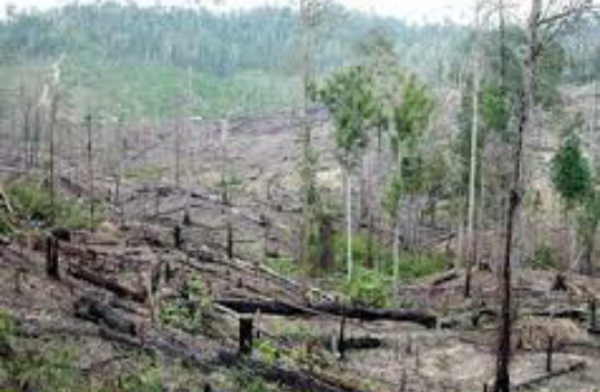 Teks Eksposisi Penyebab Utama Kerusakan Alam Adalah Perilaku Manusia