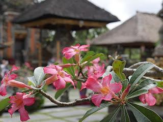 Bali, Bunga Kamboja