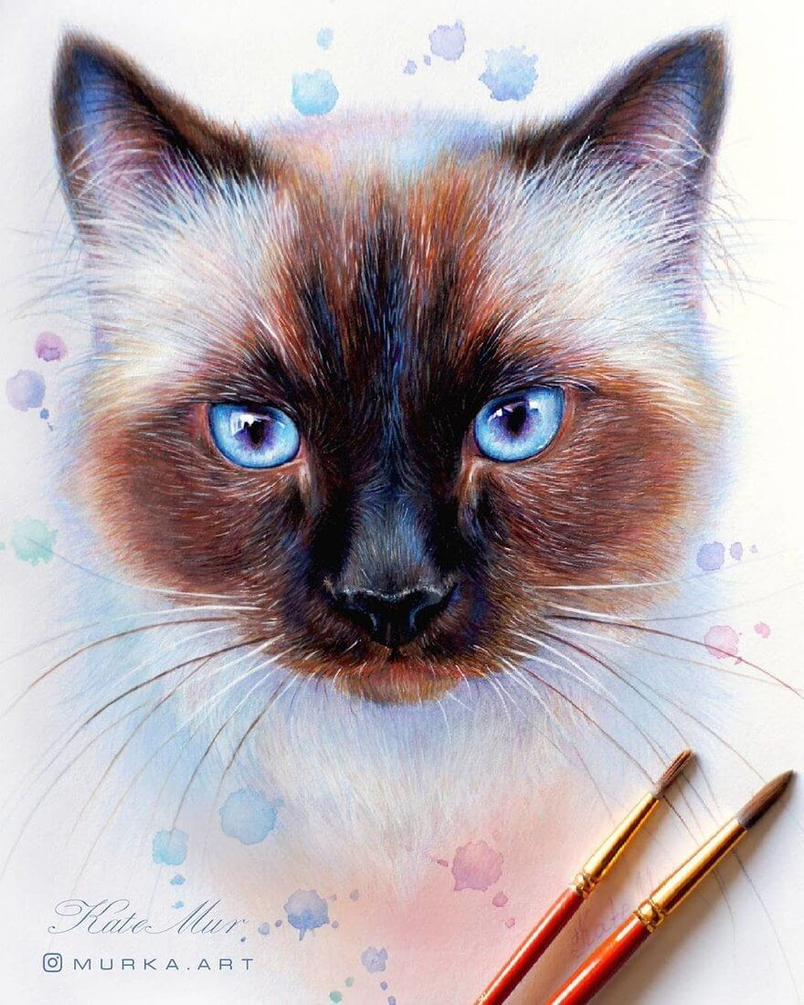 04-Siamese-Cat-Kate-Mur-Animal-Art-with-Pencil-Ballpoint-Pen-and-Paint-www-designstack-co
