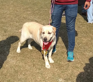 Jamshedpur Kennel Club - 62nd, 63rd and 64th Championship Dog Show