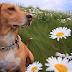 Πού οφείλονται οι εαρινές αλλεργίες στον σκύλο...