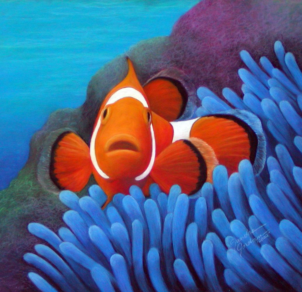 Funny clown fish wallpaper |Funny Animal