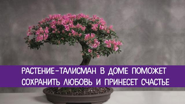 Цветы приносящие в дом здоровье