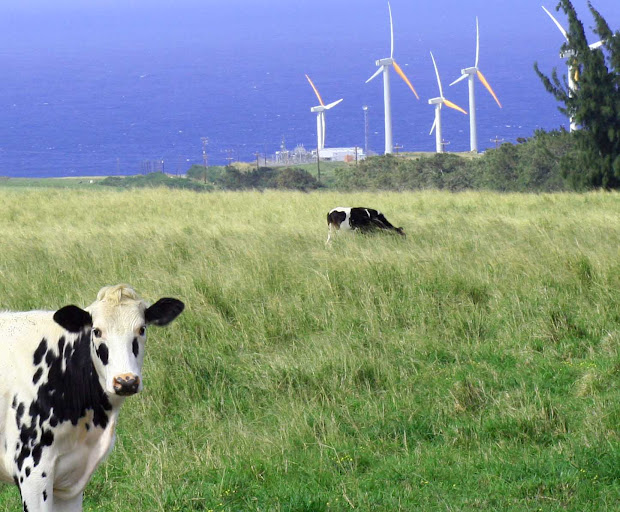 20 Wind Farms Oahu Map Pictures And Ideas On Meta Networks