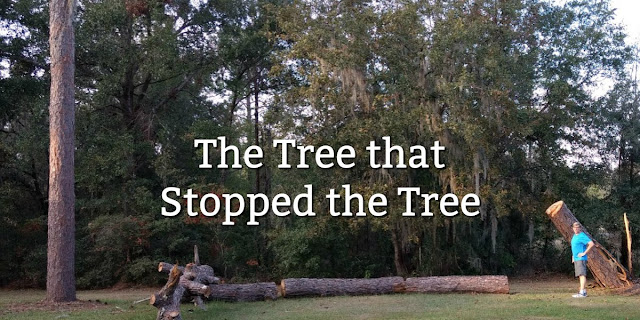 When the hurricane blew down an 80 foot pine in our yard, I thought of this Biblical principle. #BibleLoveNotes #Bible #Hurricane