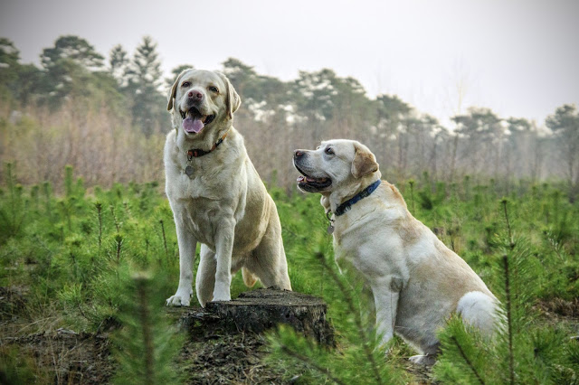 Pets%2BAbs - Female or Male: Do That Really Matter in choosing your Dog?
