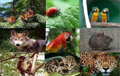 Crisis de la biodiversidad