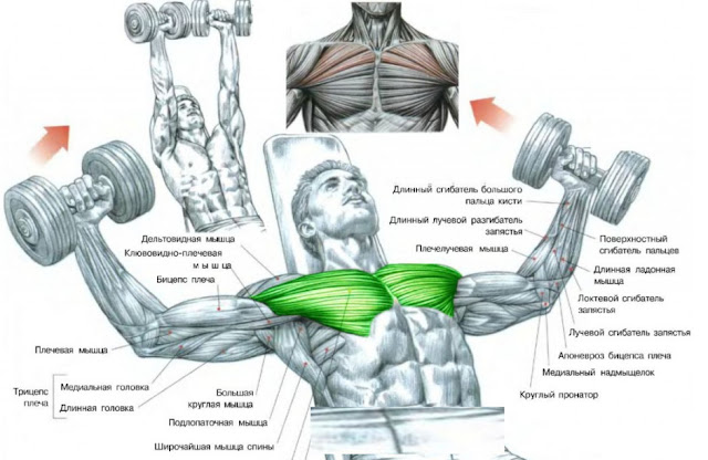 TOP BODYBUILDING CHEST EXERCISES YOU CAN TRY AT HOME.