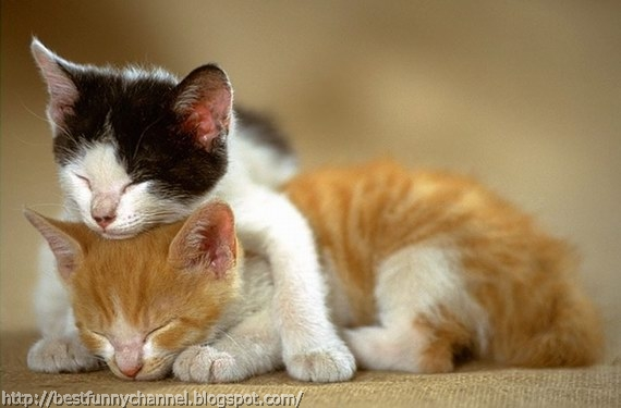 Two cute kittens.