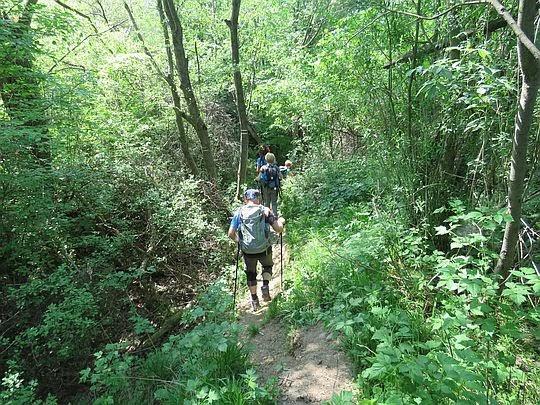 Zejście przez chaszcze nad potok Matisa.
