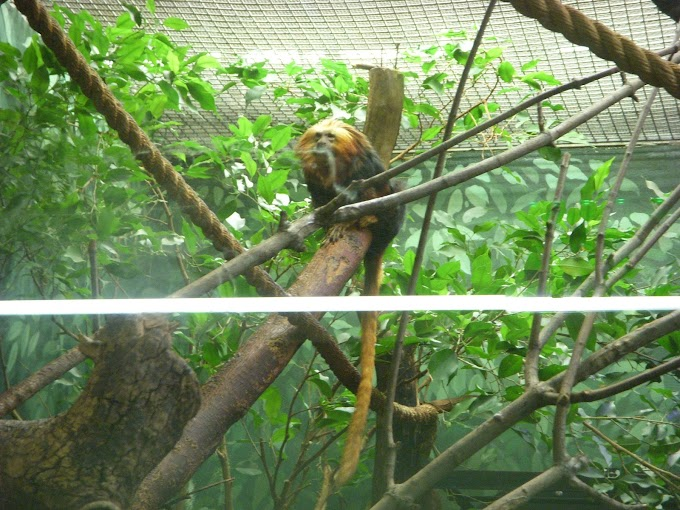 National Zoo Redux Part VII: Small Furry Friends New and Old