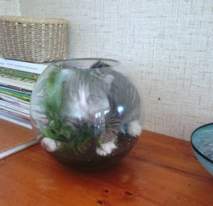 Funny cats - part 88 (40 pics + 10 gifs), kitten sits inside a glass pot