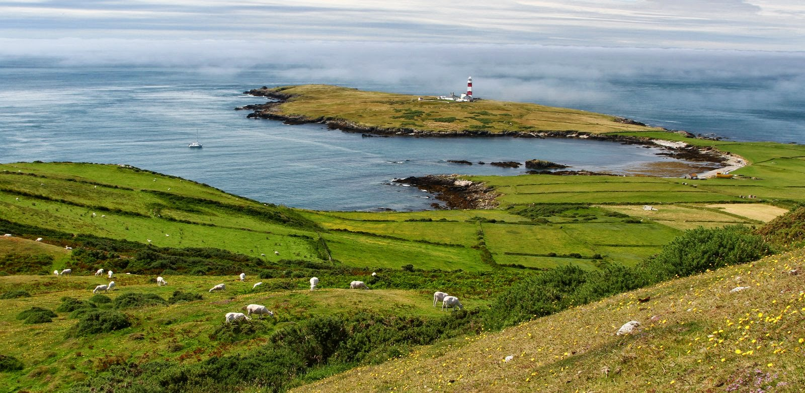 About Bardsey Wildlife