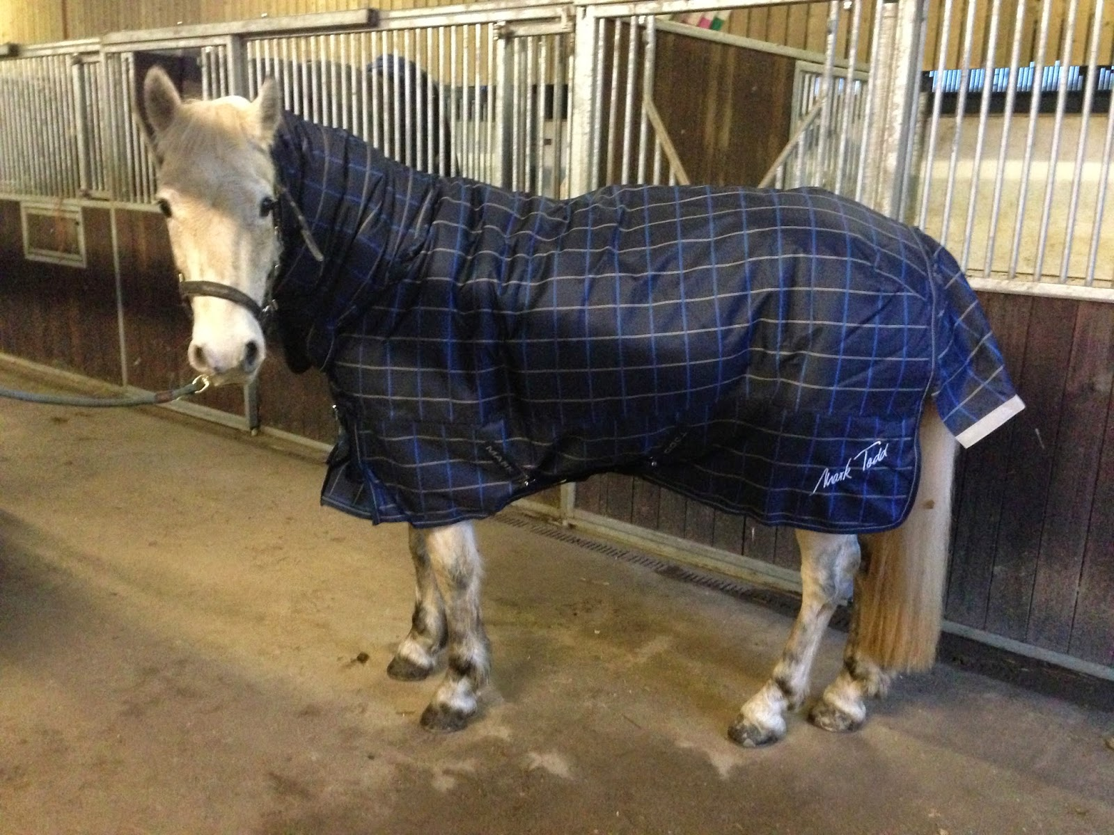 Mark Todd Heavy Weight Turnout Rug