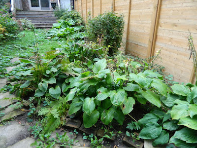 Riverdale Backyard Fall Cleanup Before by Paul Jung Gardening Services--a Toronto Organic Gardener
