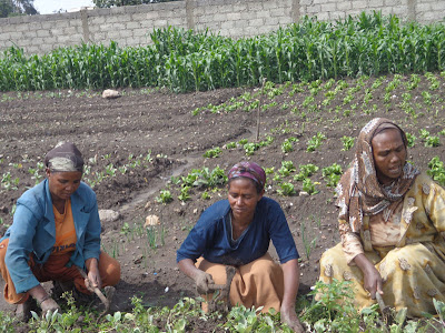 addis ababa ethiopia women