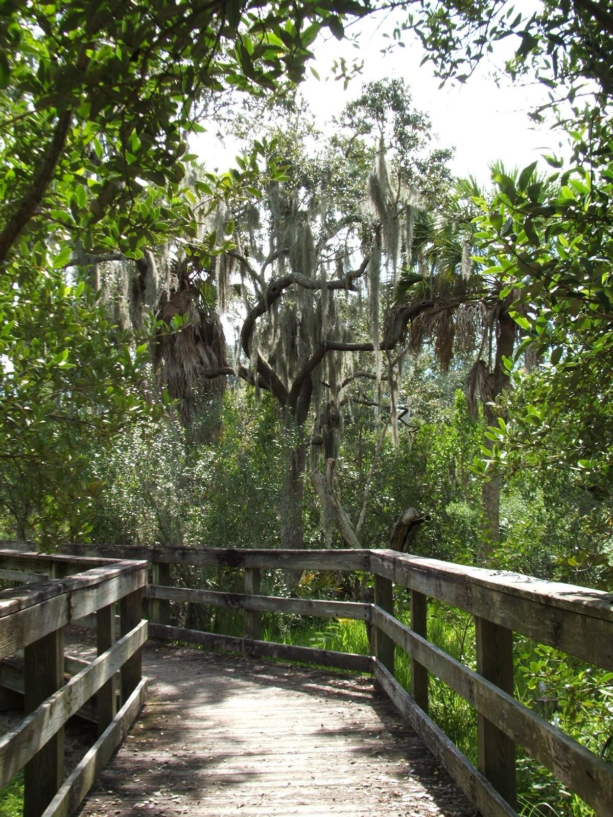 Rediscovering Florida Hammock Park Dunedin Fl Rdf 12
