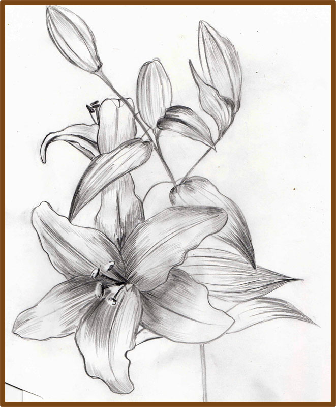 Weekly : Doodles and tuts: How to draw a Lily - Method 2