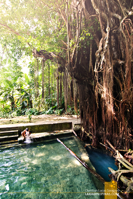Siquijor Balete Tree Pool