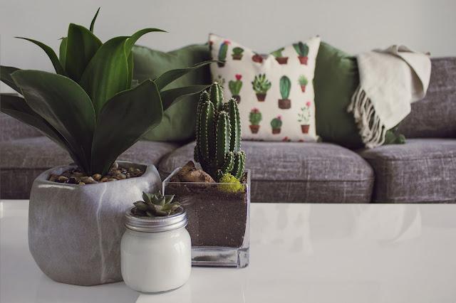 Cactus Plant and Sofa Decor