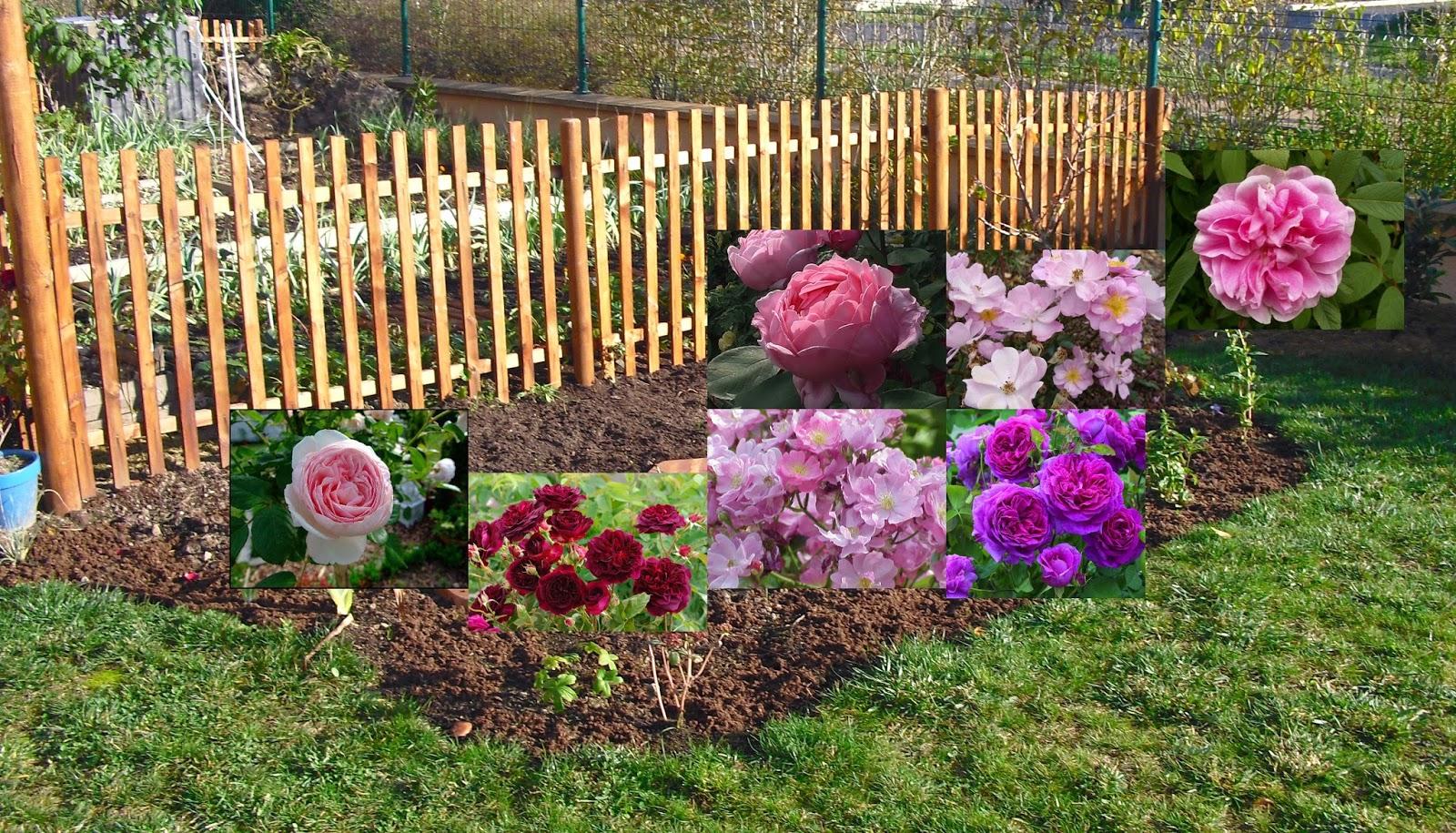 mon petit jardin en sologne les rosiers du massif invincibelle. Black Bedroom Furniture Sets. Home Design Ideas
