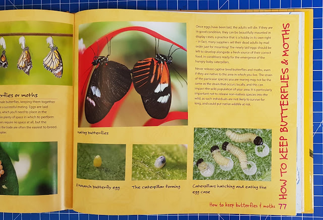 Childrens guide to keeping butterflies and moths