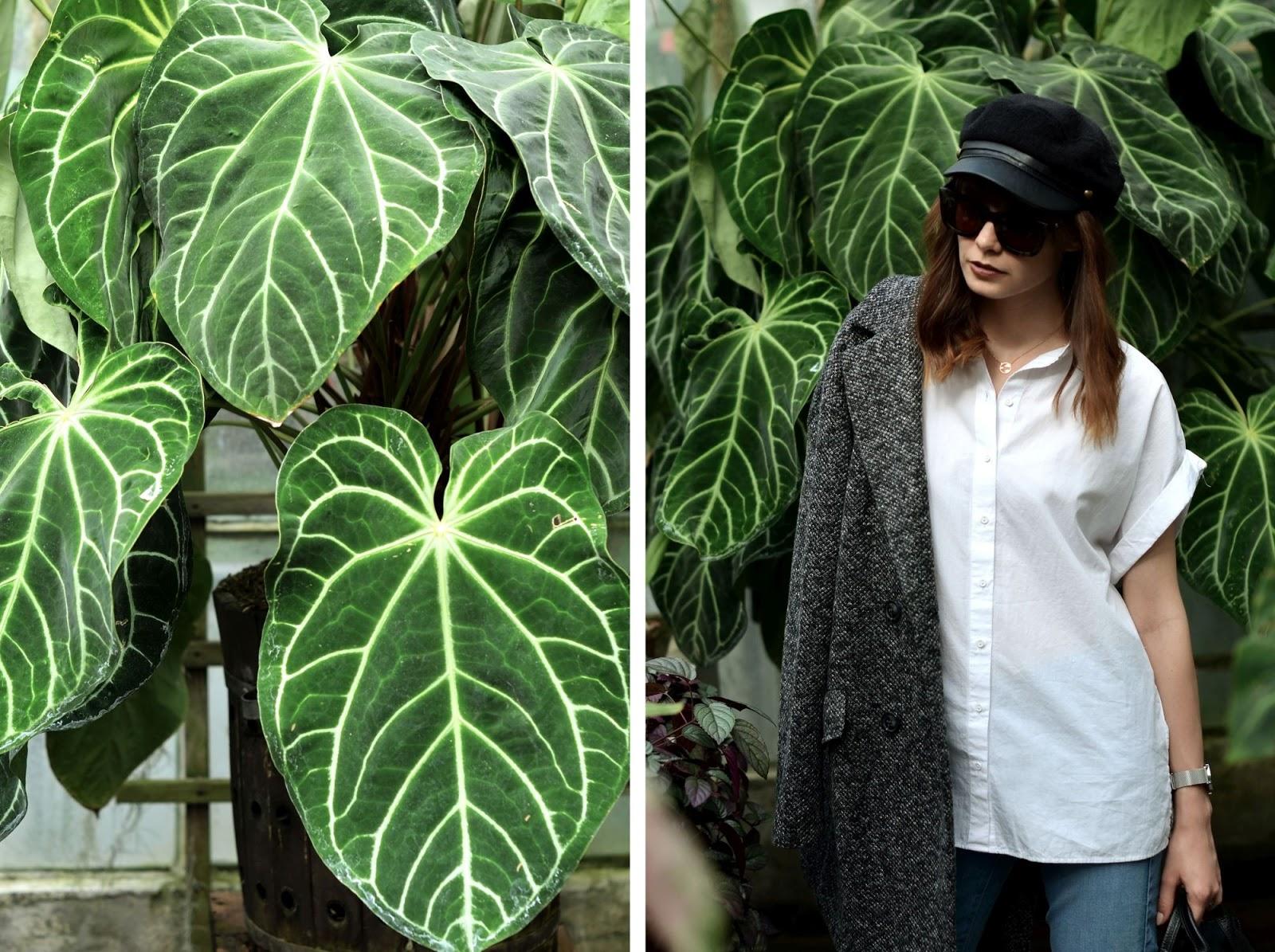 ogrod botaniczny | palmy | wakacje | krakow