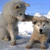 η επιβραβευση στην εκπαιδευση των σκυλων