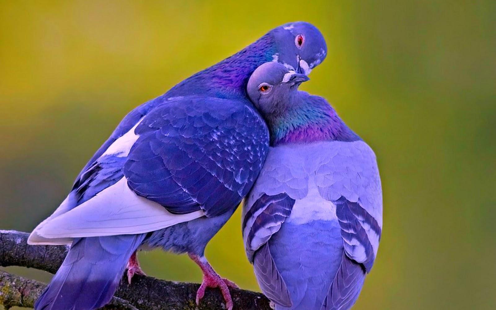 Có nên hôn nhau nơi công cộng