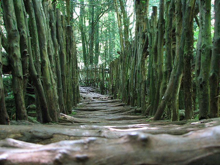 Puzzlewood Tolkien S Inspiration For Middle Earth Damn