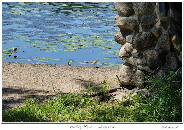 Sudbury River: ... almost there...