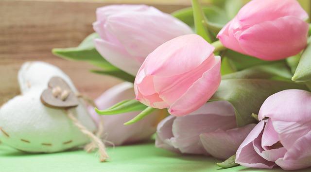 hoa tulip dep nhat 4