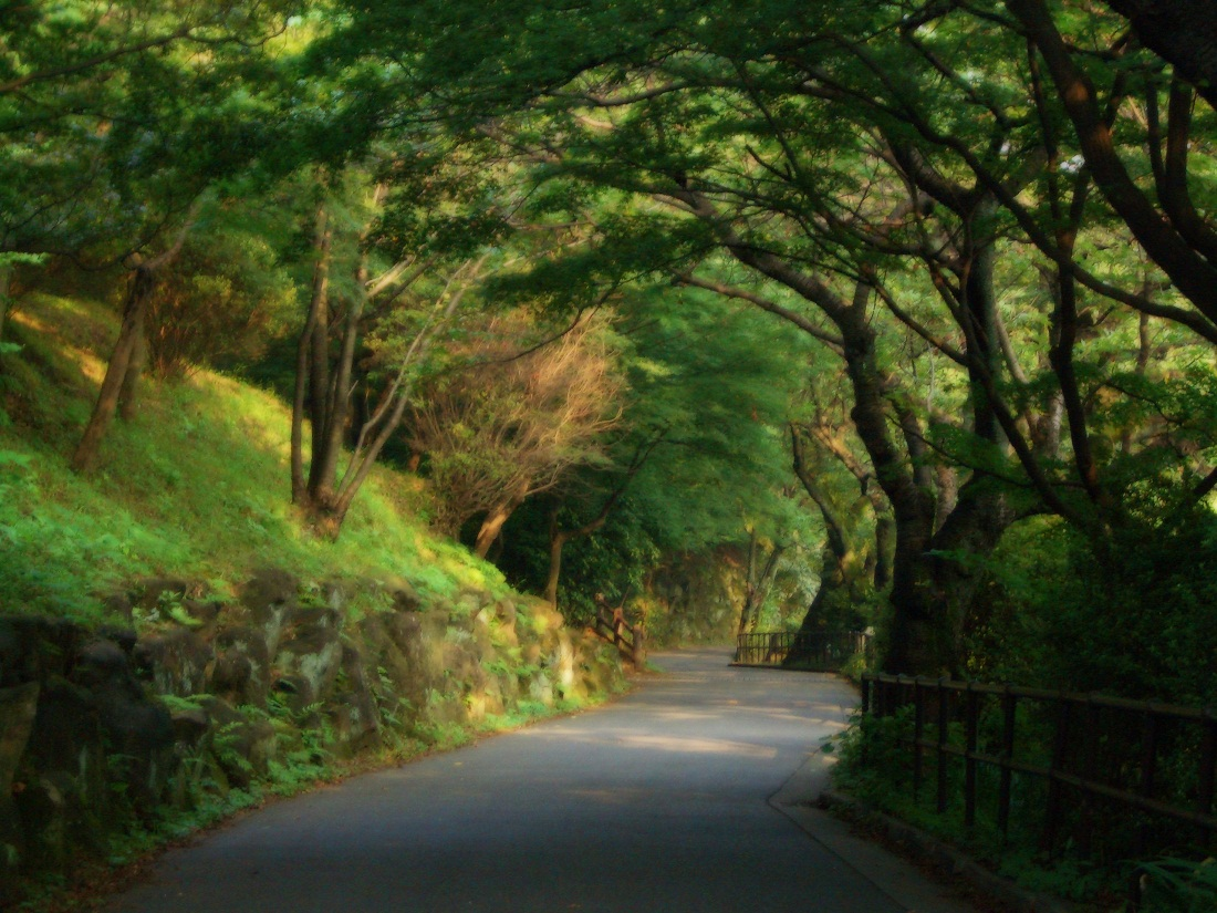 Its Cool Forest Roads All About Photo