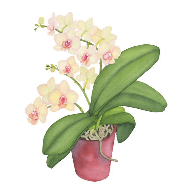 watercolor, watercolor paintings, botanical watercolor, houseplant portrait, watercolor orchid, Anne Butera, My Giant Strawberry