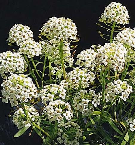 Greenzone Landscape Design Sun Loving Plants That Aren T