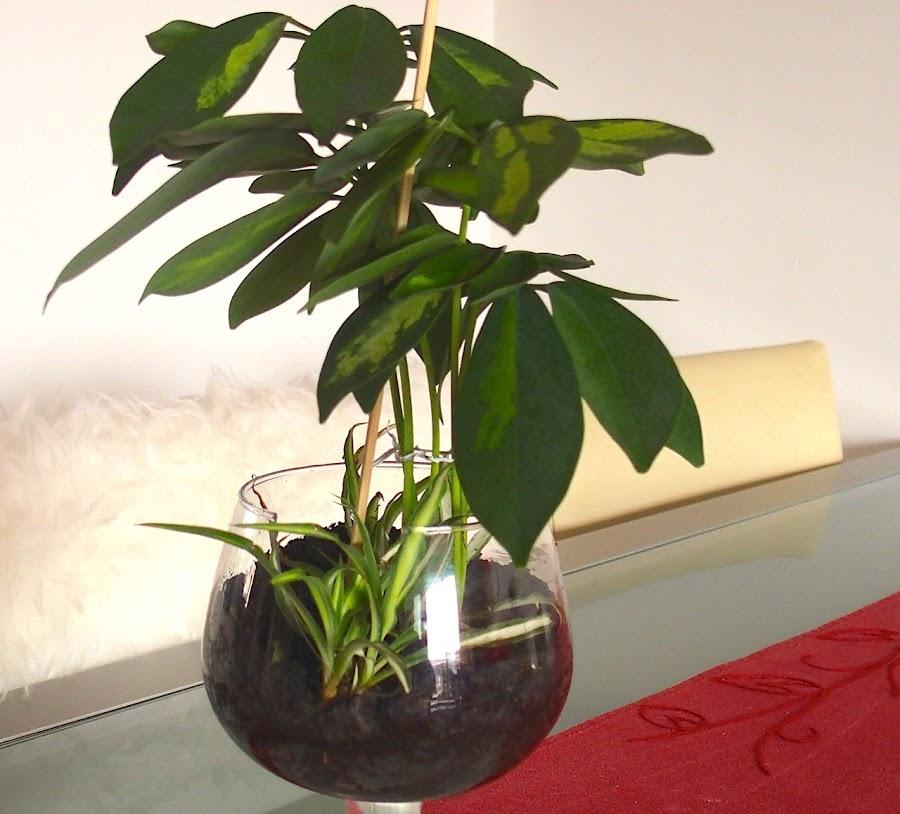 Mis reproducciones de plantas y reciclaje