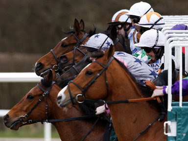 racing tips, winning racing tips, betting tips,