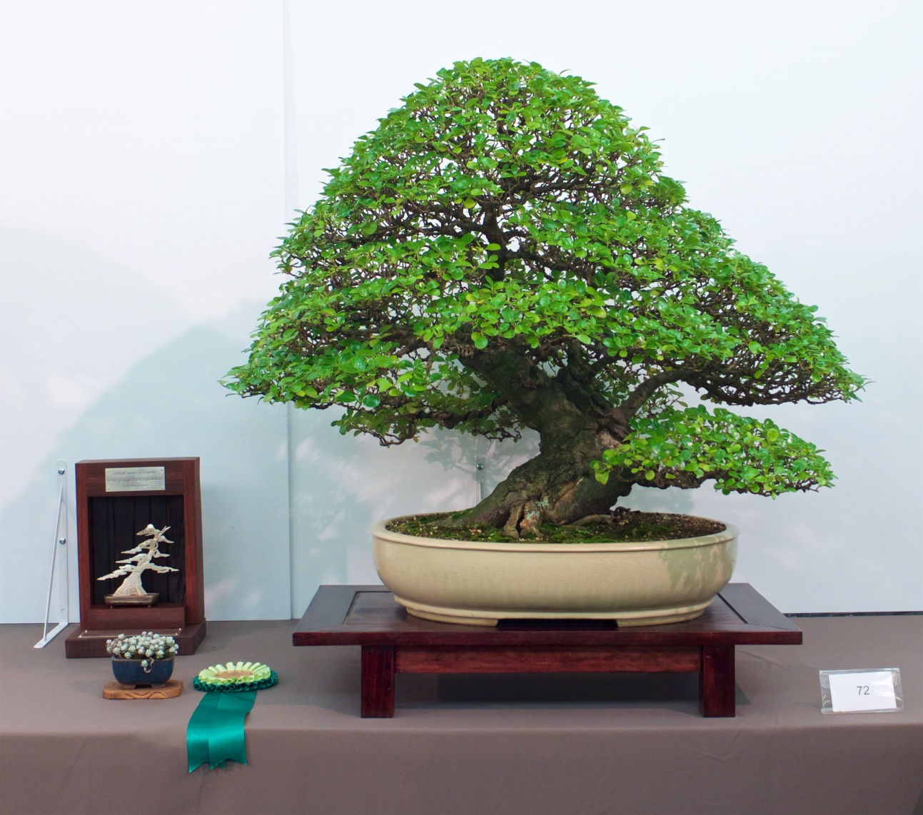 Bonsai Society Of Victoria In Australia